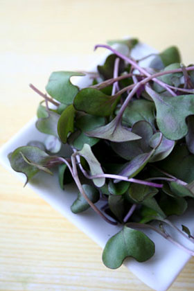 Microgreens Red Cabbage