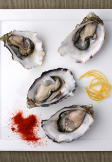 The Nibble Oyster Information
